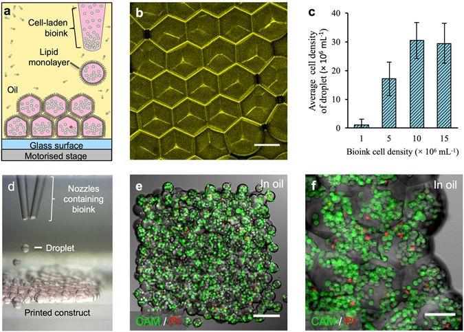 в оксфорде развивают 3д биопечать клеток